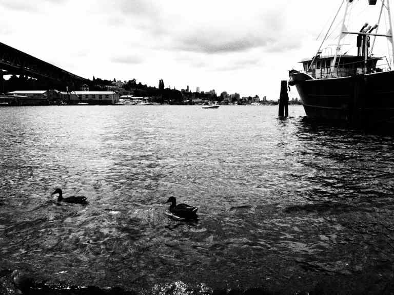 waterfront #15
