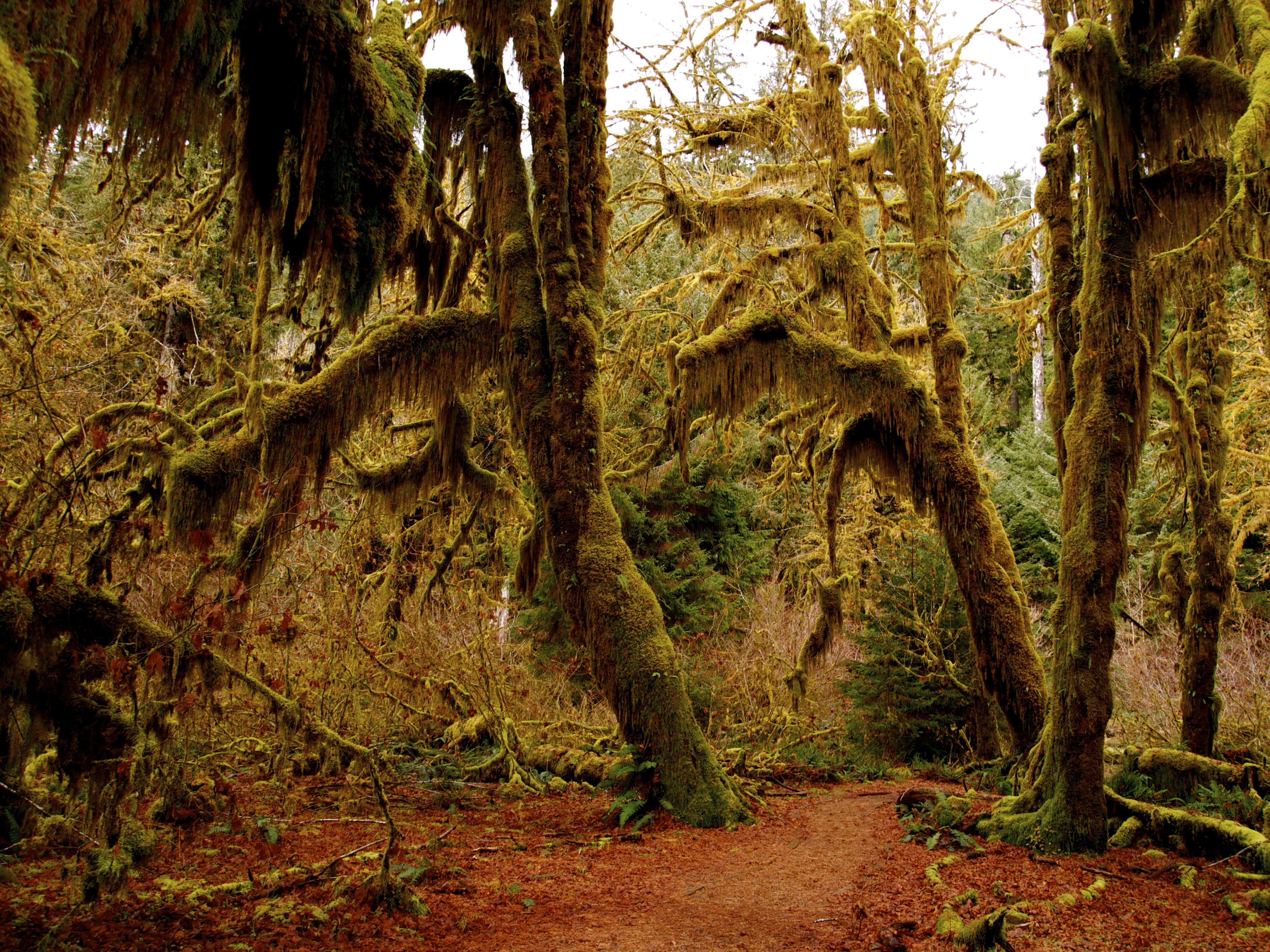 washington rainforest